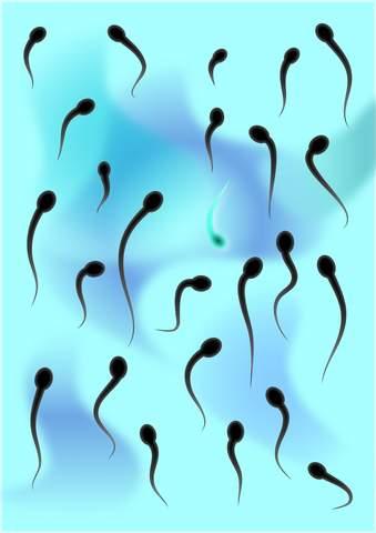 Спермограмма норма и расшифровка  Анализ спермы правила