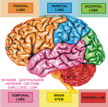 головного мозга человека: